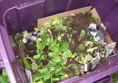 Compostin