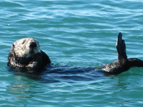 Otterpose